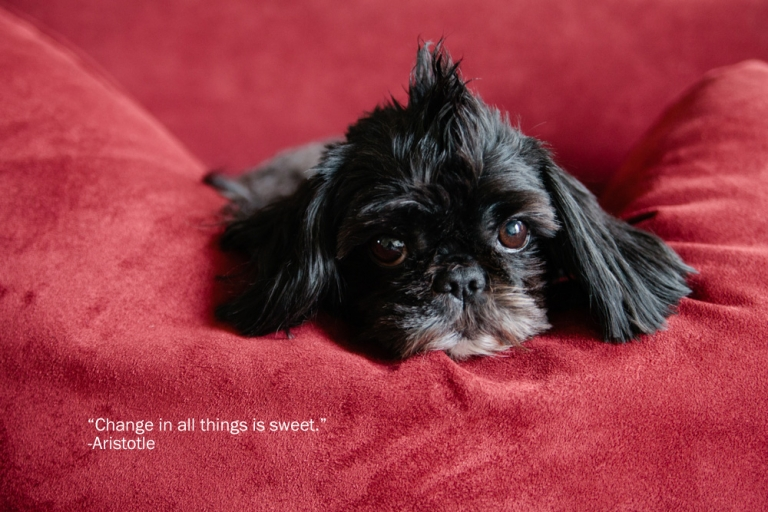 kylene lynn pet photography